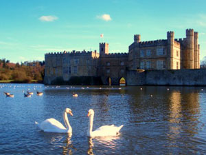 View of Leeds Castle across the lake with two swans in the foreground